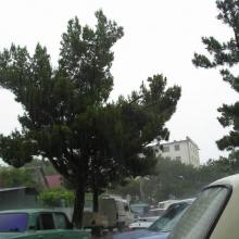 В самом городе дождь уже шел стеной