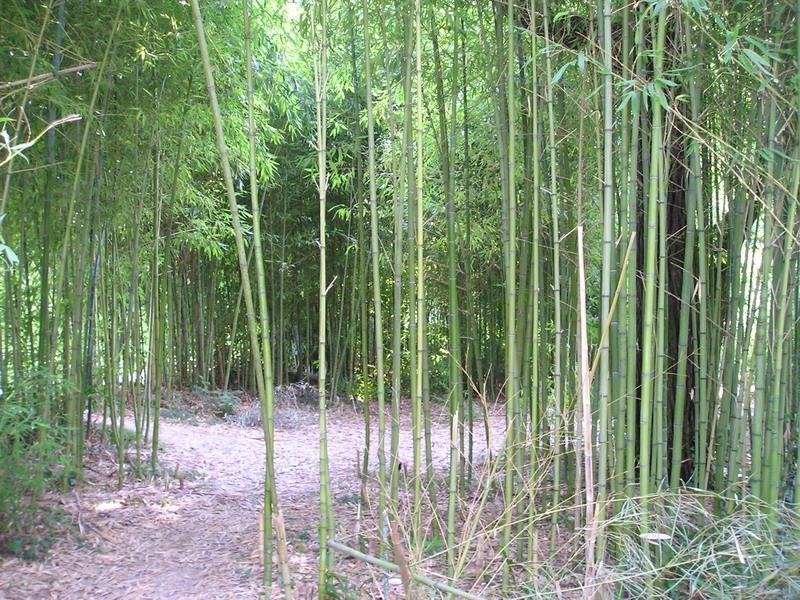 Бамбуковая рощица
