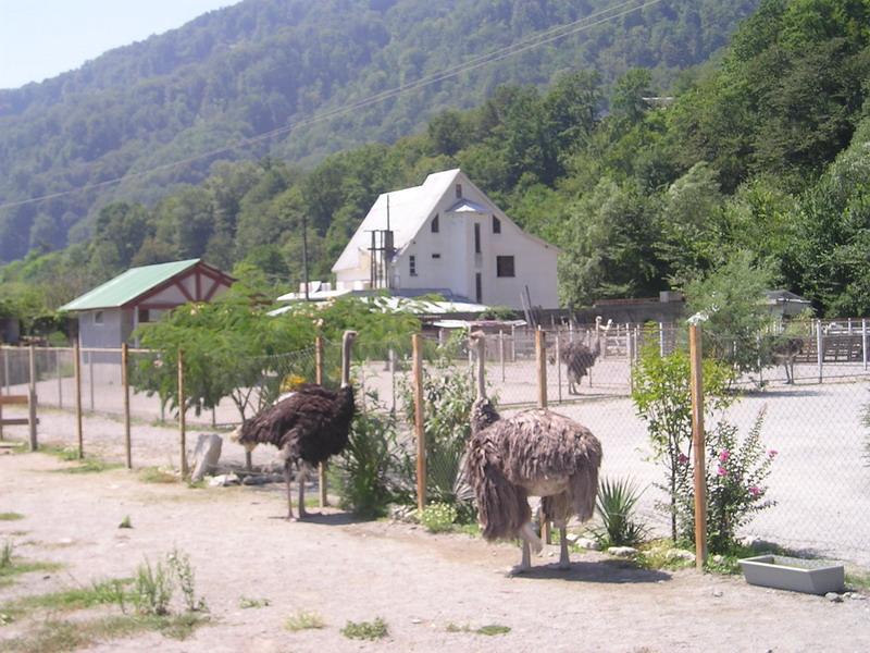 """Страусиная ферма """"Три Софии"""""""