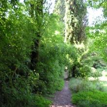 В новой части парка