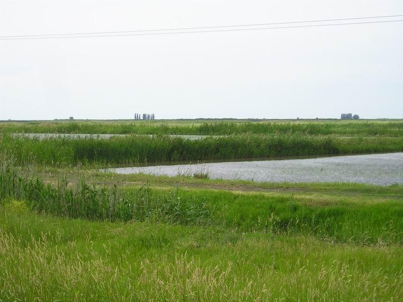 Тут растет краснодарский рис
