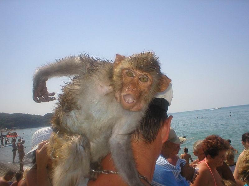сфотографировать экзотических животных в компании себя любимого...