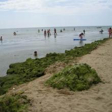 Водоросли на Центральном пляже