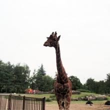 Вроцлав. Зоопарк.