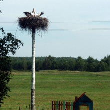 Белоруссия - страна аистов
