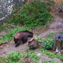 Медвежий мост